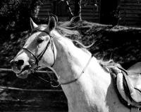 Ośrodek Jeździecki Tarpan